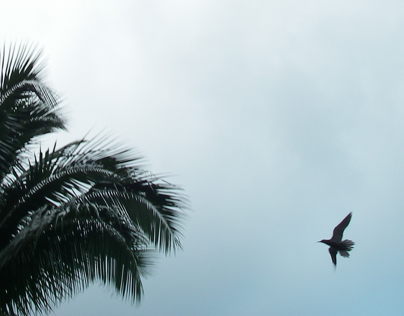 23. Birds were a common sight in Bora Bora. Even if we could not identify a bird in a photo we took, scientists at the Cornell Lab of Ornithology were still interested in the photo.  They are studying migration patterns of birds.