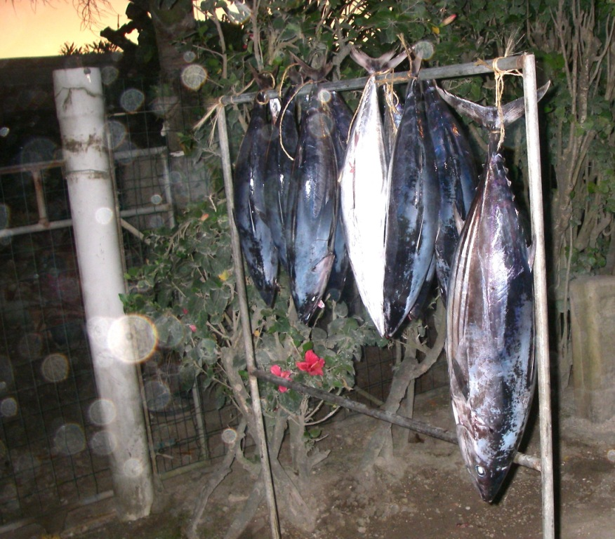 38. Freshly caught red tuna fish were for sail at US$10 per pound.  The fishermen sold their fish in front of their houses on the road to Vaitape.  All the red or white tuna fish we ate in Bora Bora and Nuku Hiva were scrumptious!  Raw or cooked!
