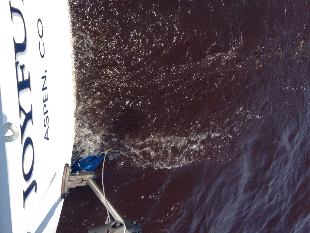 7. This photo taken from Joyful's stern, shows the very red color of the red tide water in Joyful's wake.  Please compare this water to the normal blue color in the next photo