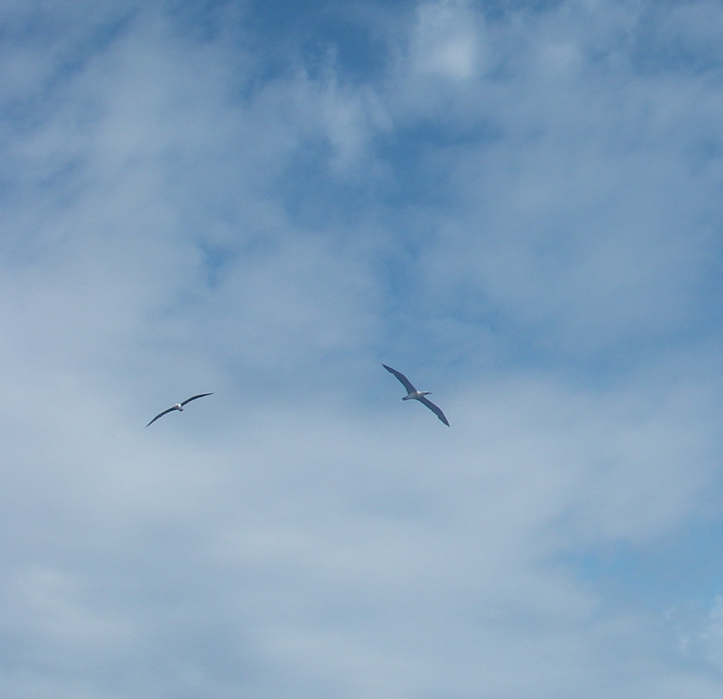 30-magnificent-sea-birds-appeared-from-over-the-horizon-and-flew-around-joyful-welcoming-us-to-australia