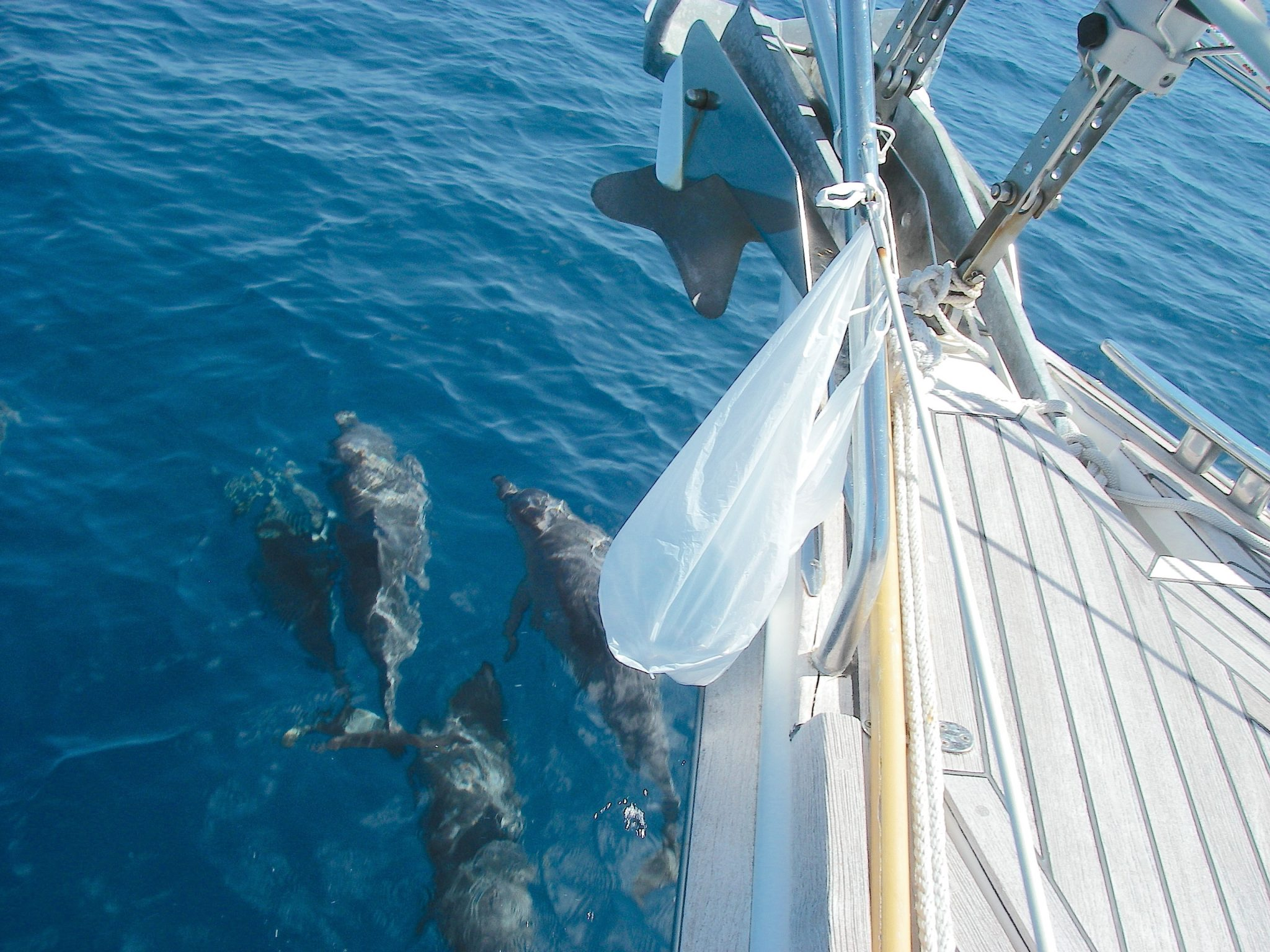 52-joyful-was-escorted-through-the-great-barrier-reef-by-a-pod-of-dolphins-the-plastic-bag-contained-some-tools-i-was-using-to-remove-a-rope-which-kept-joyfuls-two-bow-anchors-from-clinking-while