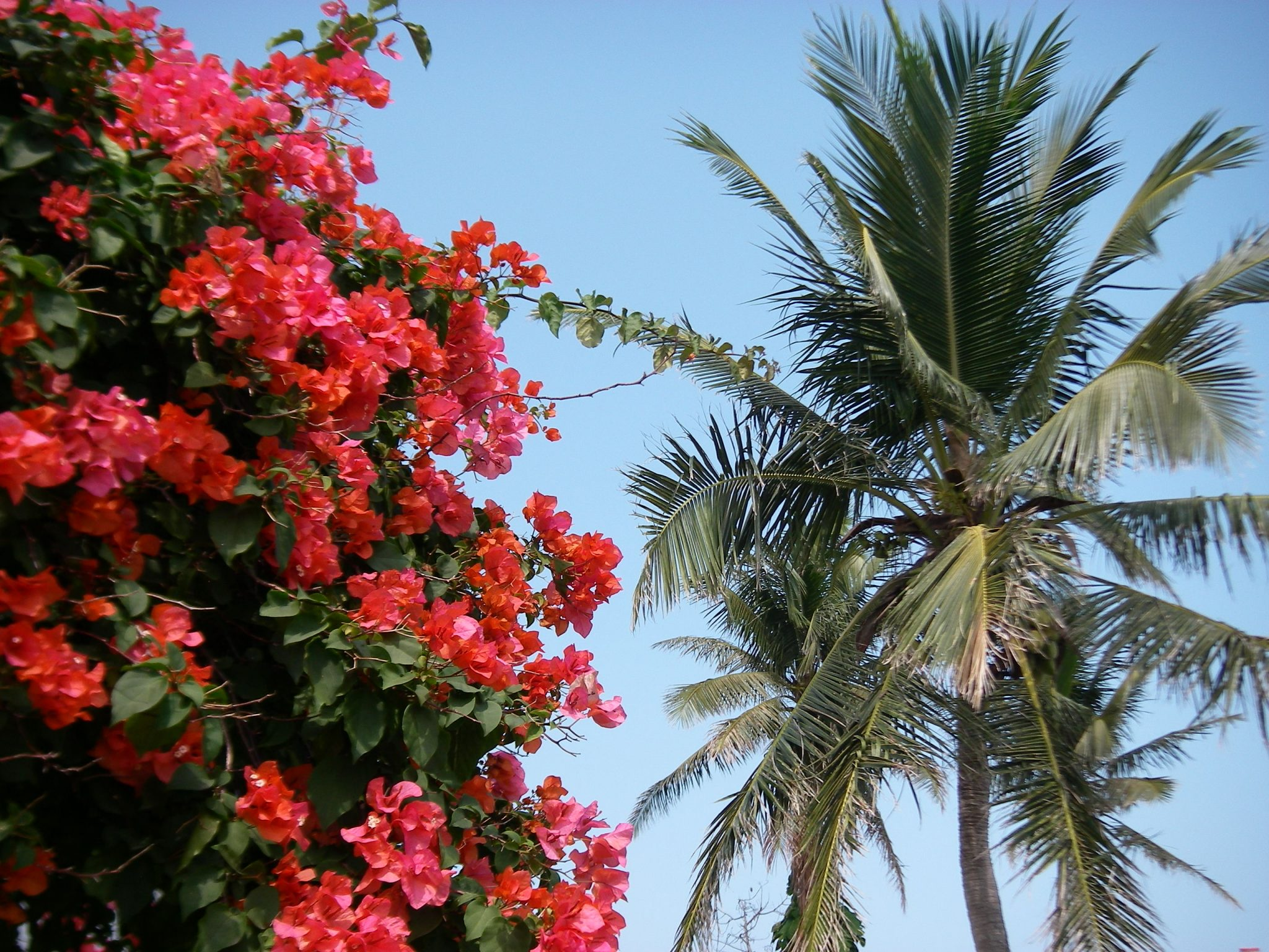 90-palm-trees-and-flowers-were-everywhere-in-this-beautiful-tropical-paradisejpg