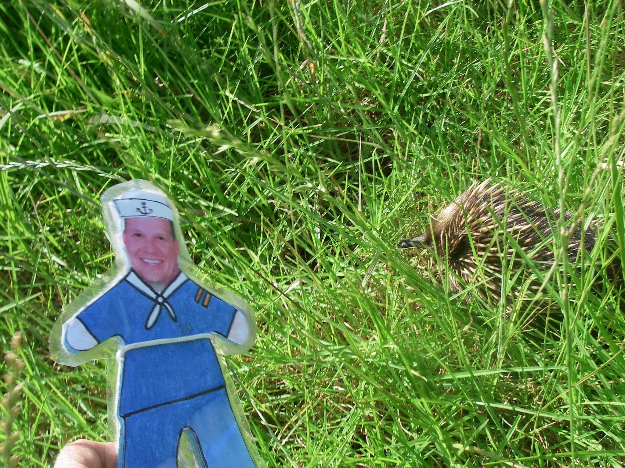 112.3. Flat Mr. Davis and a wild echidna by our hotel in Berry, New South Wales, Australia. Echidnas are one of Australia's marcupials, and only live wild in Australia