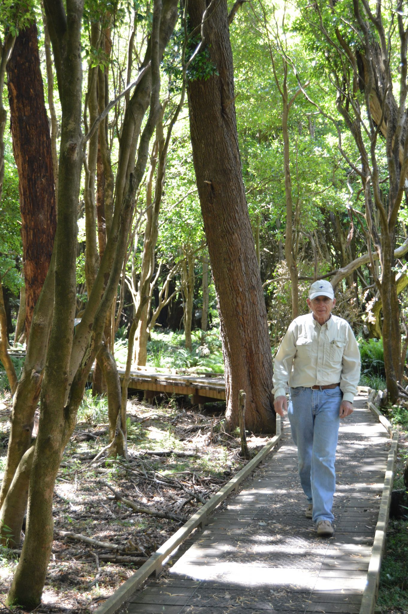 136.1. Jeff enjoyed learning about this unique forest in Victoria, Australia
