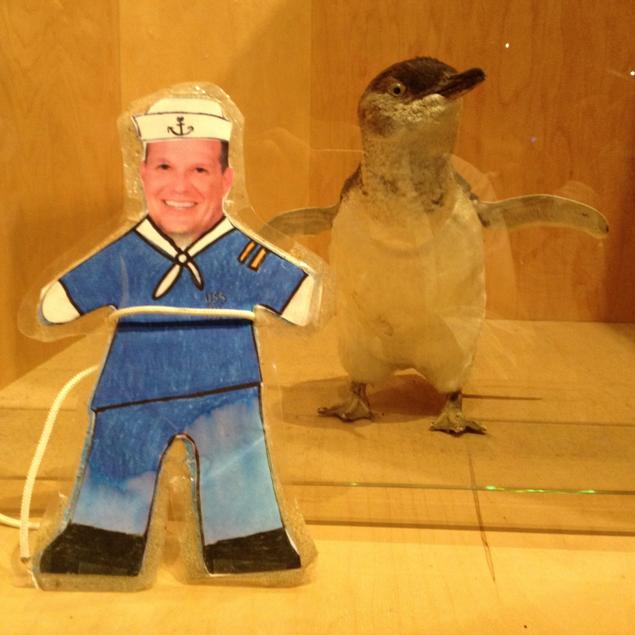 153. Flat Mr. Davis stands next to a stuffed adult Little Penguin in the museum near the bay on the Bass Strait, Australia, where we saw them come out of the sea at sunset in large group