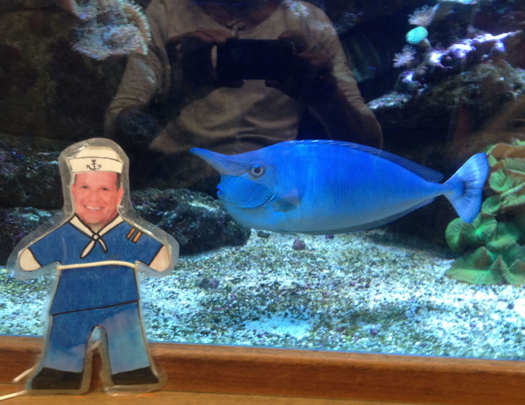 36. Flat Mr. Davis and Blue fish with long nose