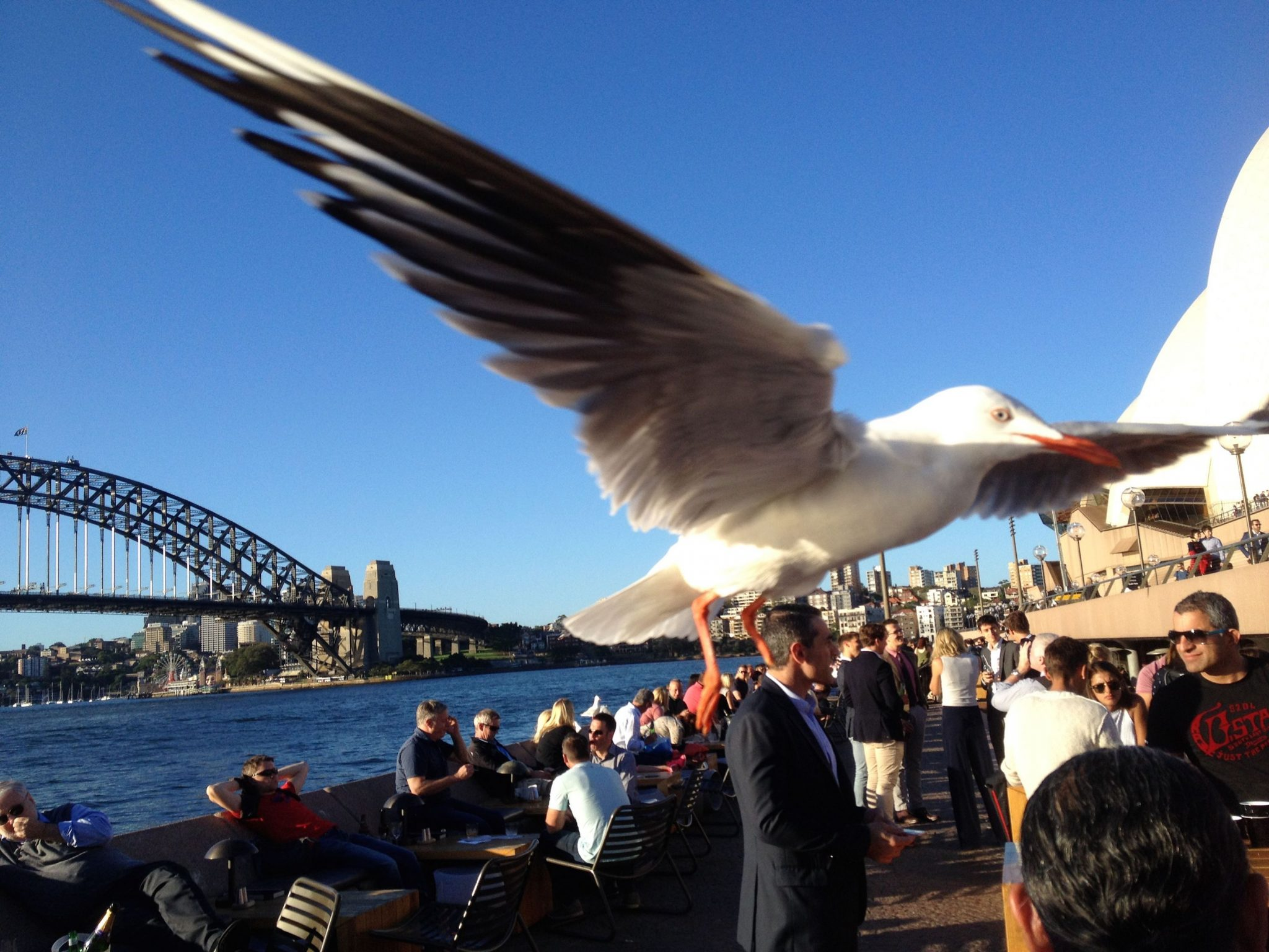 41.1. Birds - Sea gulls flew near the Sydney Opera House. Look at what happened to us in the next photos! jpg copy