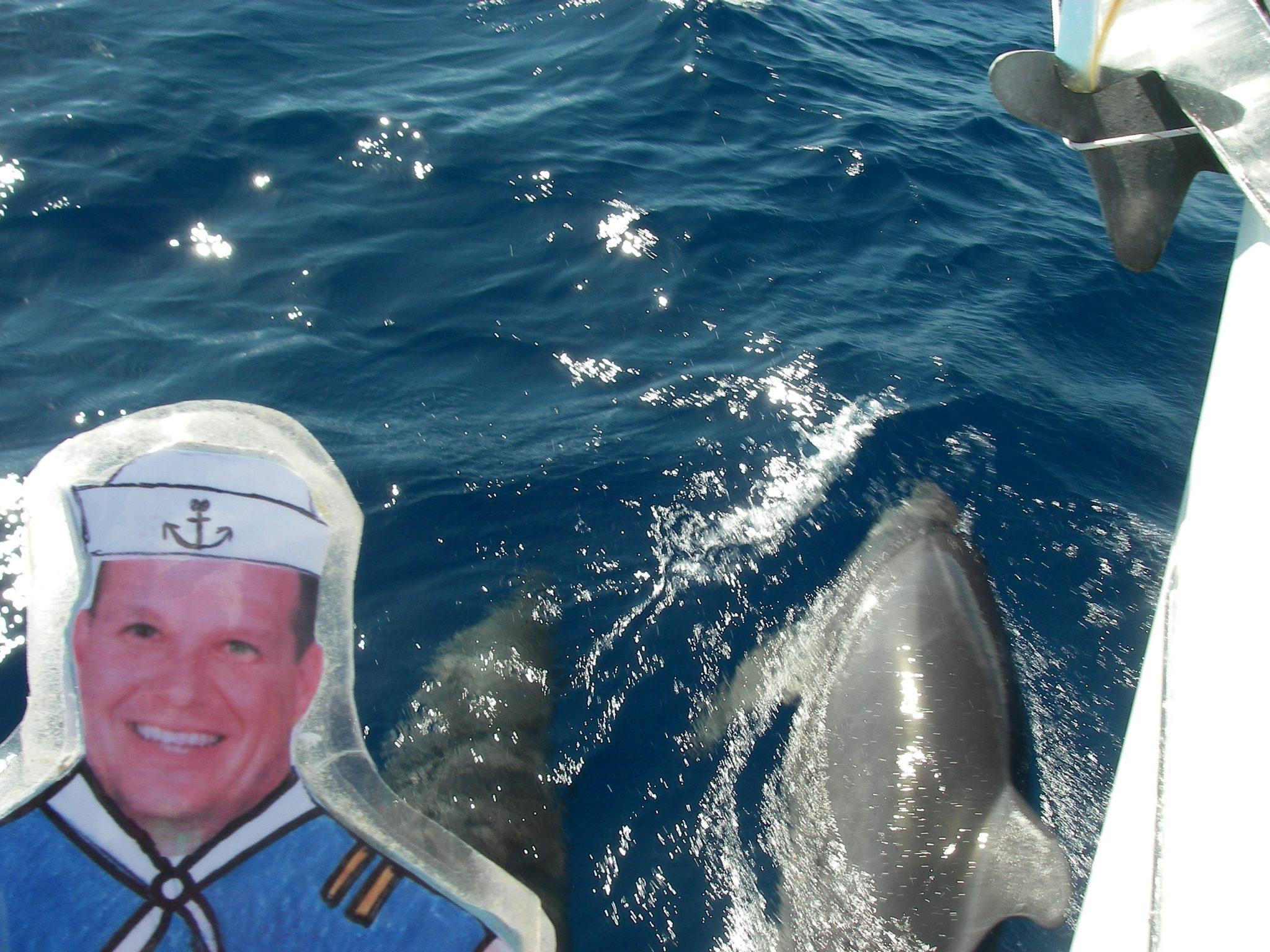 46. Flat Mr. Davis liked Joyful's dolphin friends