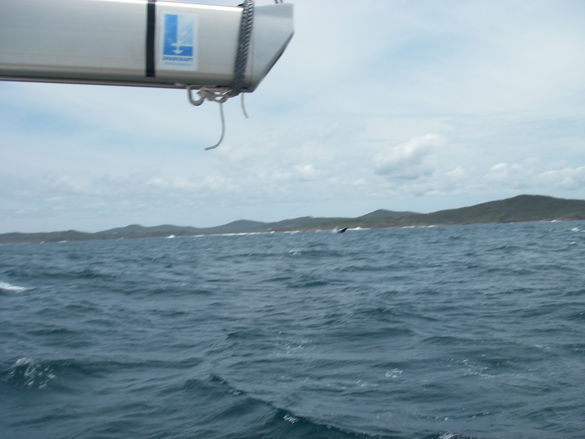 52. We saw humpback whales in the water. This one is broaching!