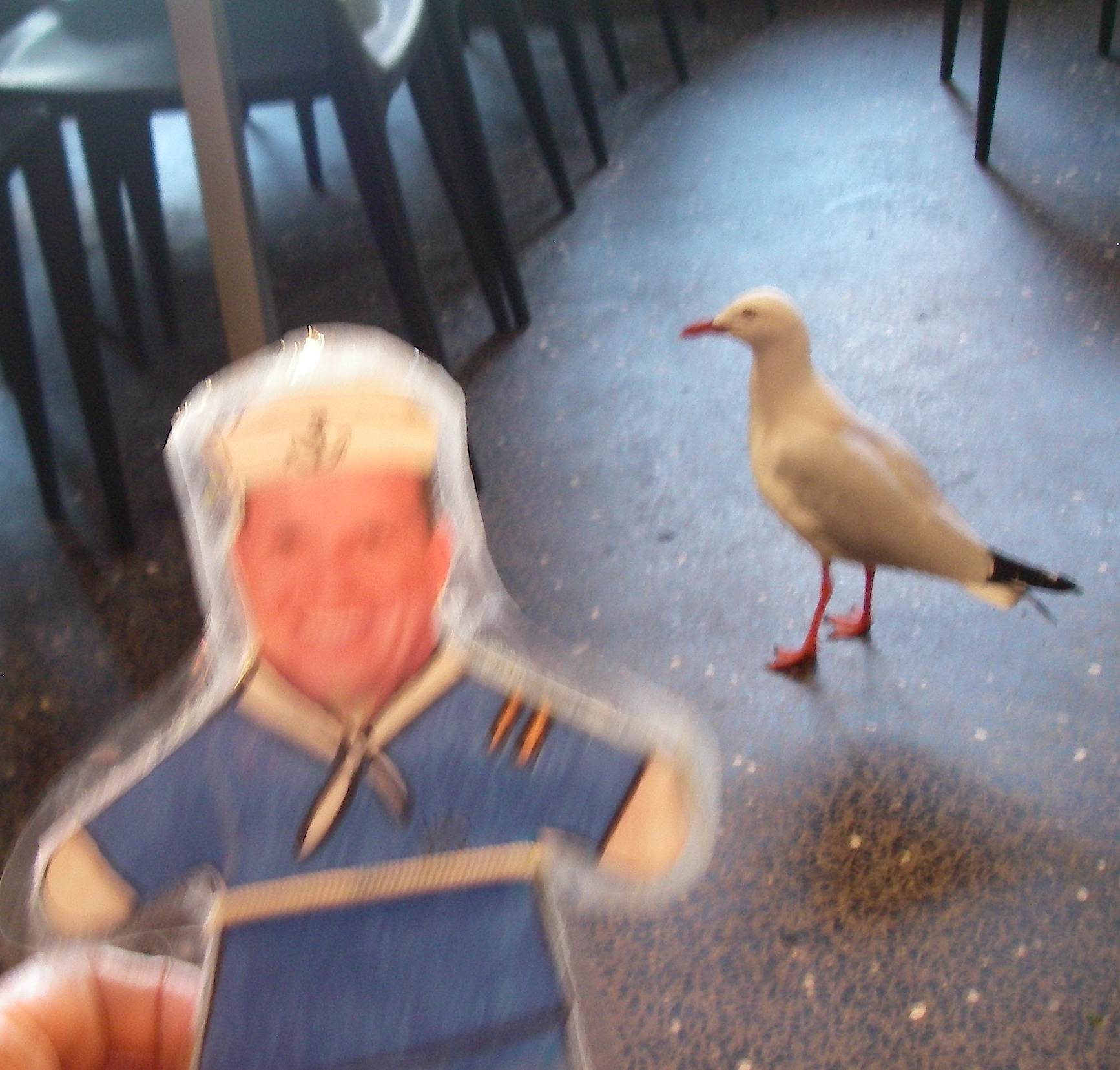 56. Birds - Flat Mr. Davis saw a wild seagull in a cafe in Sydney, Australia, November 2015