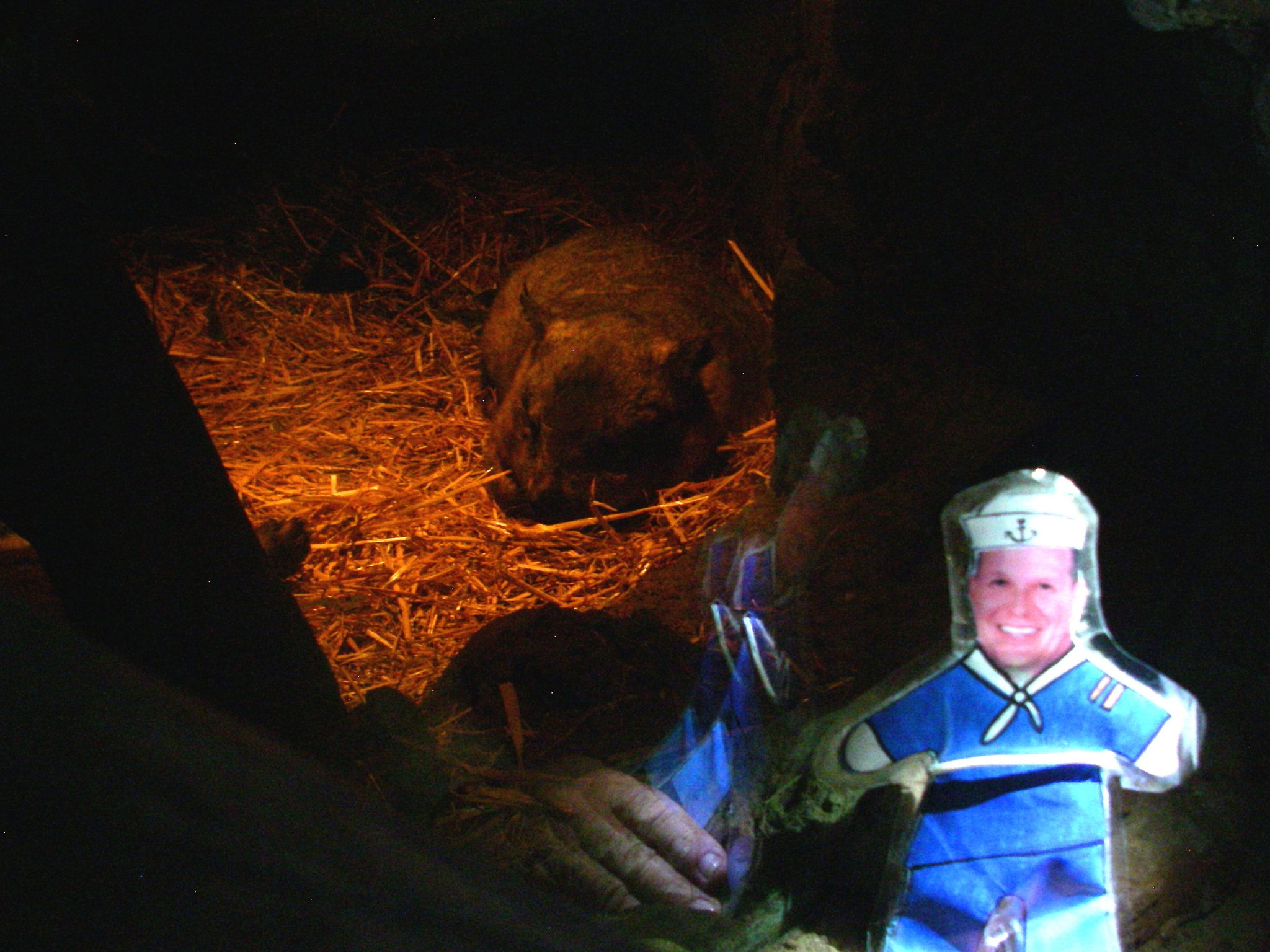 60.9.1. Flat Mr. Davis saw a snoozing wombat at the Toranga Zoo in Sydney