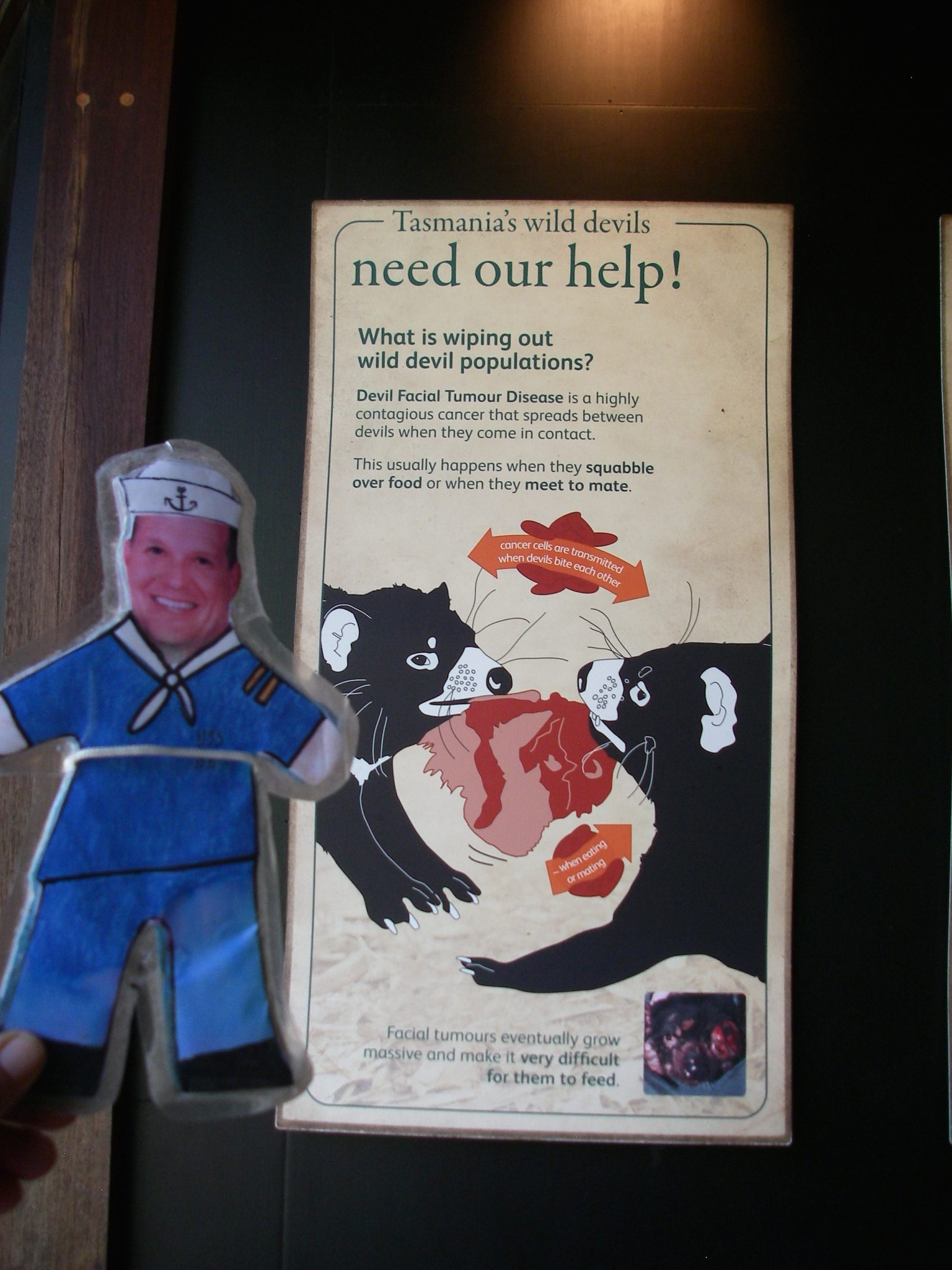 61.4. Flat Mr. Davis was sorry to read about the troubles Tasmanian Devils have