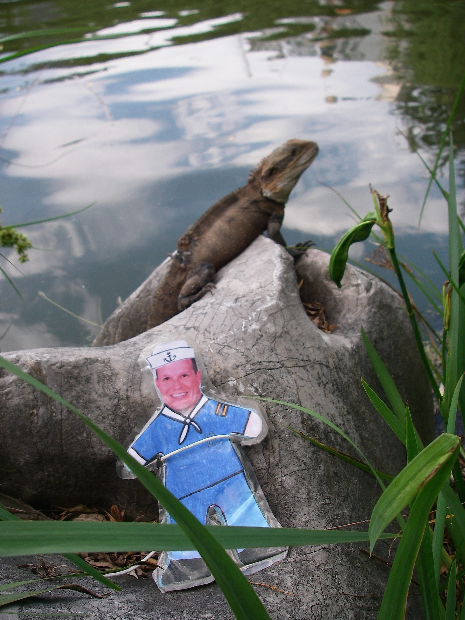 68.2. Flat Mr. Davis saw a wild lizard in a pond at the Chinese Garden in Sydney, Australia